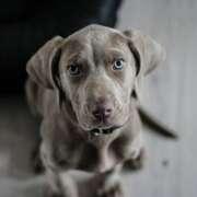 Jak nauczyć psa komend?